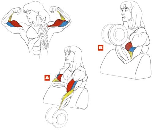Как накачать руки девушке в домашних условиях с гантелей