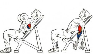 incline-biceps-curls