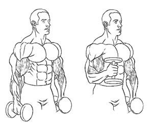 kak-nakachat-biceps-8